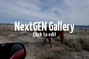 Willcox, Arizona and the Sand Hill Cranes